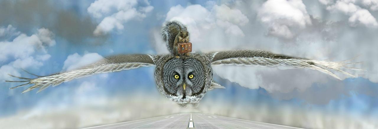 Bilder von Hörnchen Eulen Vögel Koffer Flug Tiere Eichhörnchen ein Tier