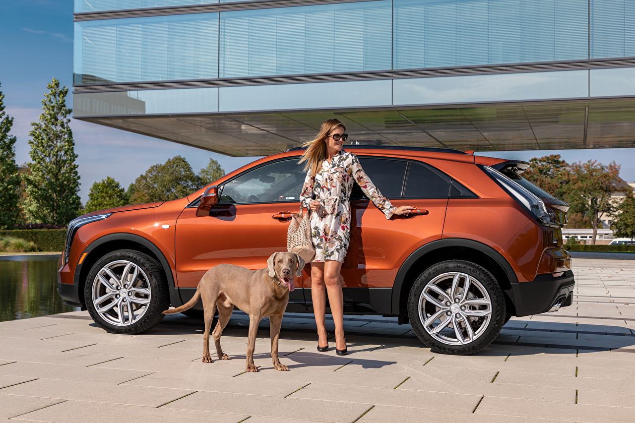 Pictures Cadillac Dogs CUV XT4 350D, Launch Edition Sport, 2020 Girls Cars Side Metallic Animals dog Crossover female young woman auto automobile animal