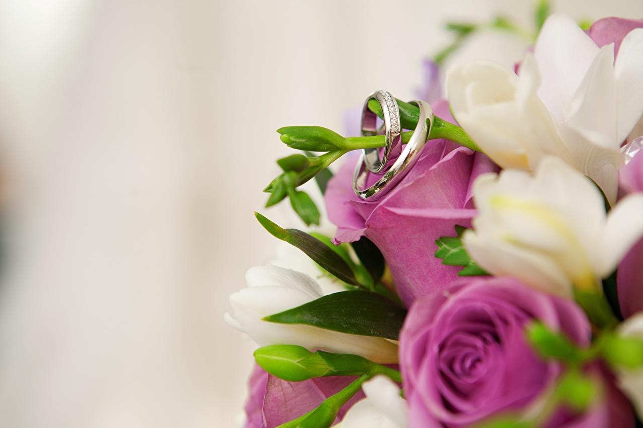 Desktop Wallpapers Marriage Rose Flowers Jewelry Ring Closeup