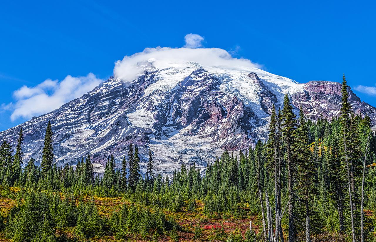 Desktop Wallpapers USA Mount Rainier National Park HDRI Spruce Nature mountain park Snow HDR Mountains Parks