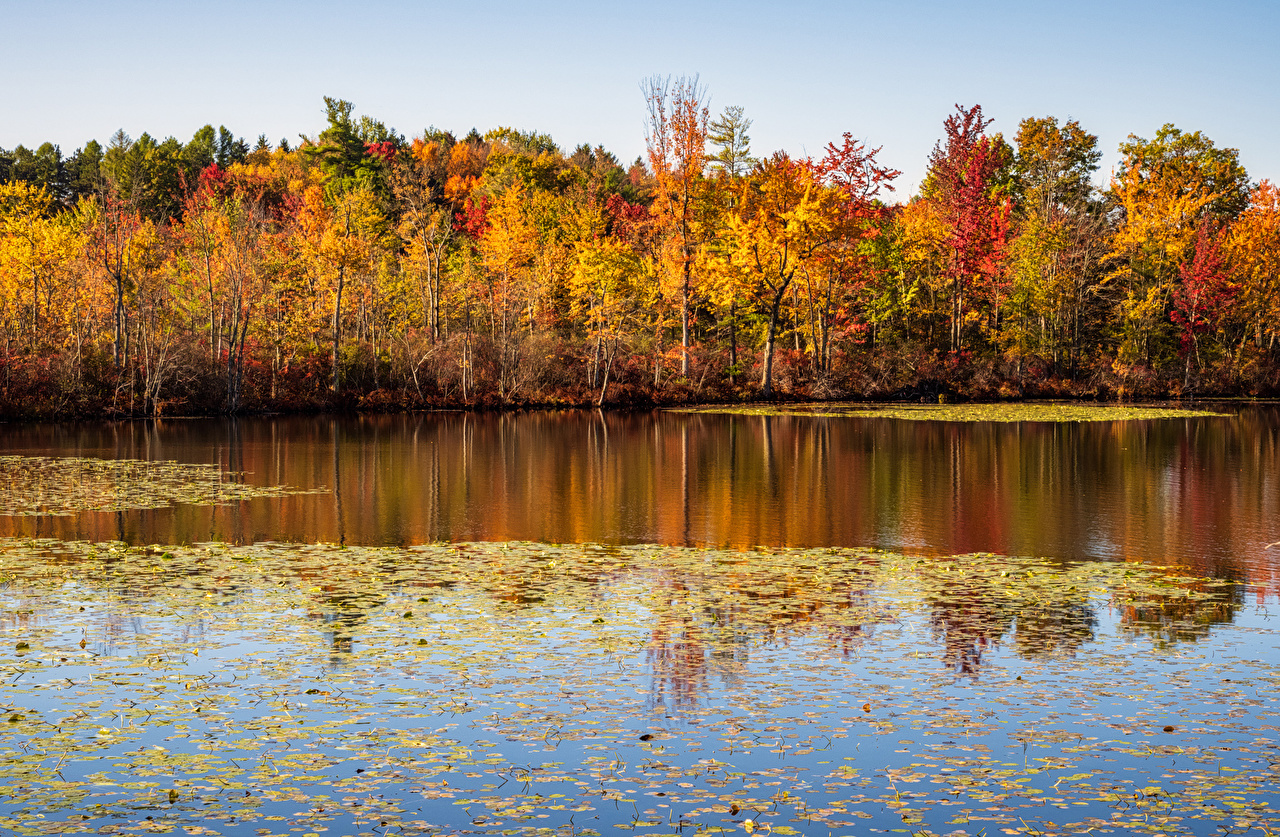 Picture USA Foliage Beaver Lake Nature Center Autumn forest Leaf Forests