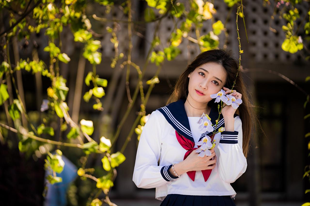 Bilder von Schülerin Bluse Krawatte Mädchens asiatisches Blick Schulmädchen junge frau junge Frauen Asiaten Asiatische Starren