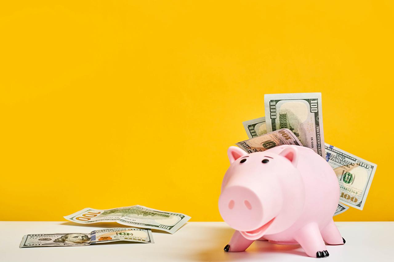 Fotos Sparschwein Dollars Papiergeld Geld Farbigen hintergrund Banknoten Geldscheine