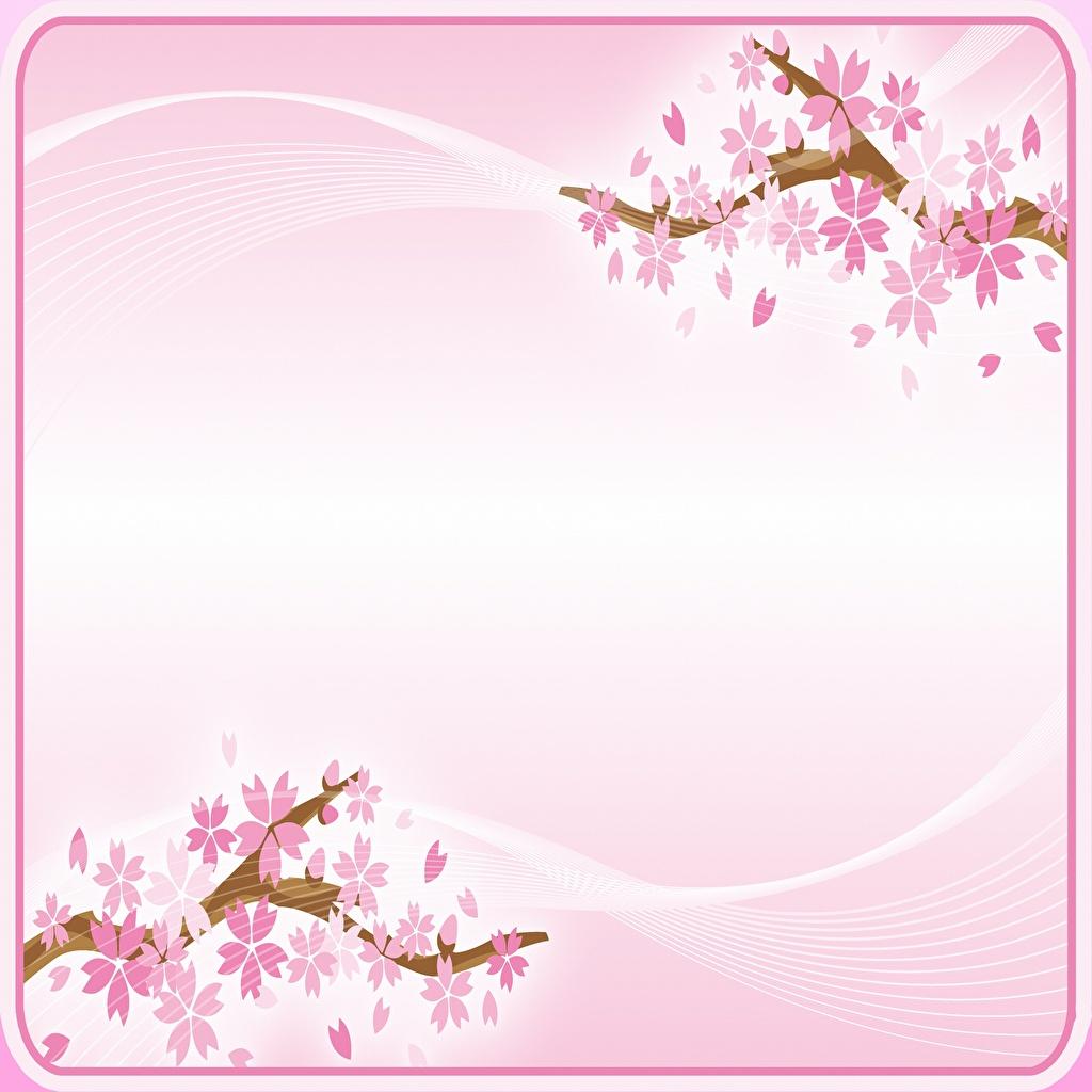 Desktop Hintergrundbilder Japanische Kirschblüte Rosa Farbe Blumen Vorlage Grußkarte Blühende Bäume Blüte