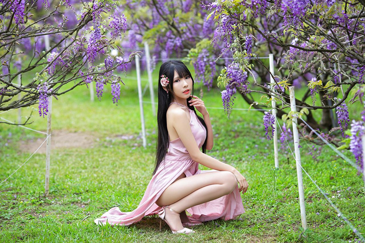 Fotos von Brünette Mädchens Asiaten sitzen Blick Kleid Blühende Bäume junge frau junge Frauen Asiatische asiatisches sitzt Sitzend Starren