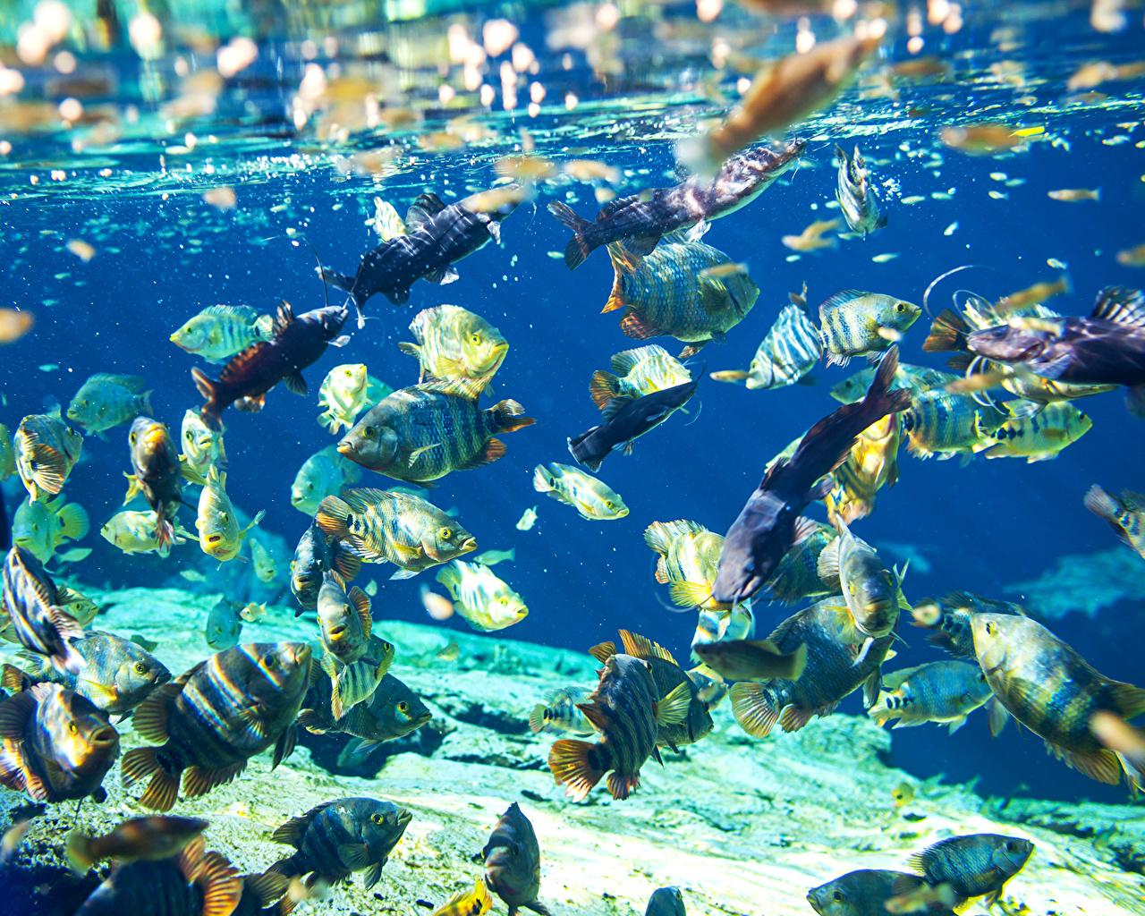 Фотография Рыбы Подводный мир Много Животные животное