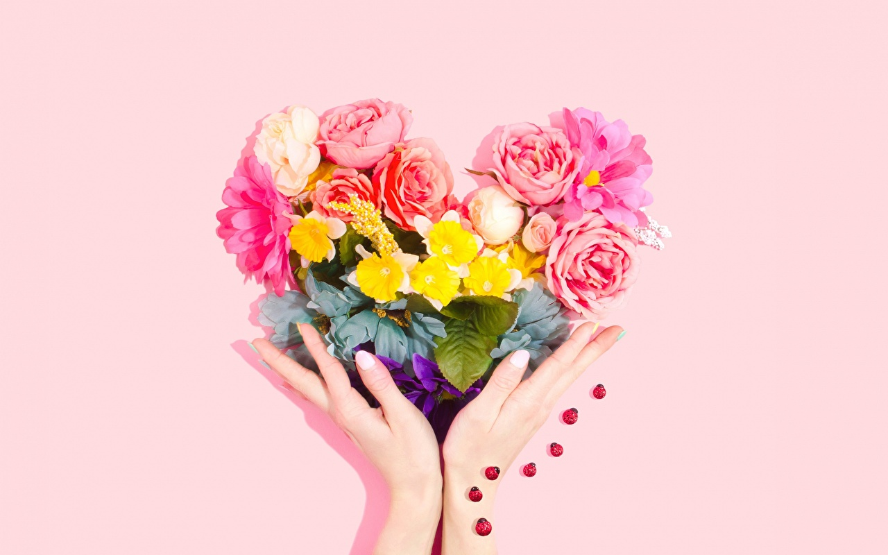Photos Heart bouquet Pink color Flowers Hands Pink background Bouquets flower