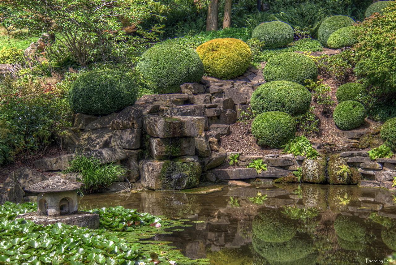 Images Germany Dortmund Nature park Pond Stones Shrubs Parks stone Bush