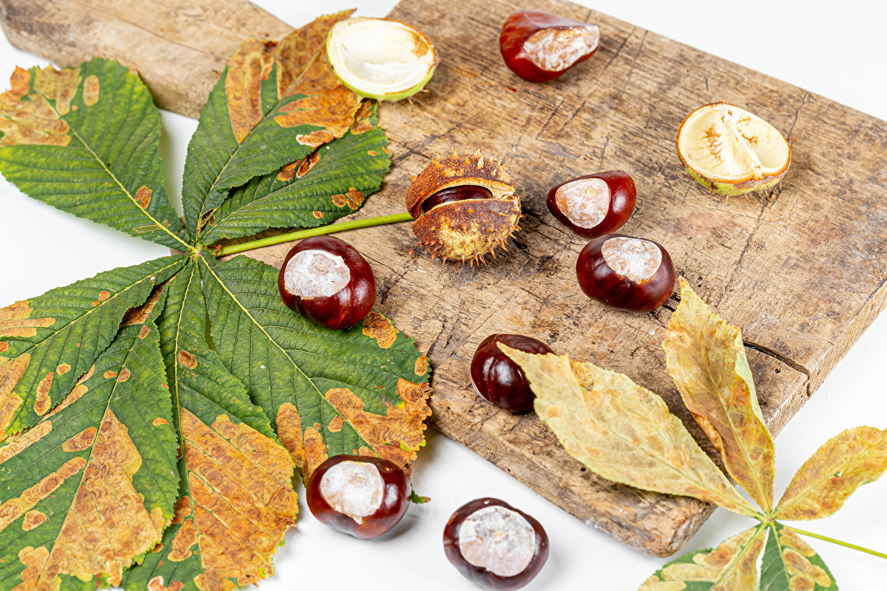 Pictures Chestnut Leaf Autumn Nature Cutting board Foliage