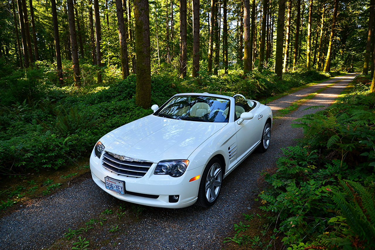 Wallpaper Chrysler 2005 Crossfire SRT6 Cabriolet White Roads forest automobile Trees Convertible Forests Cars auto