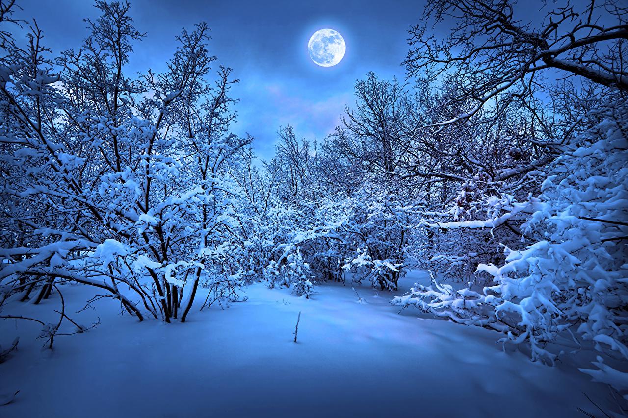 壁紙 季節 冬 雪 月 枝 自然 ダウンロード 写真