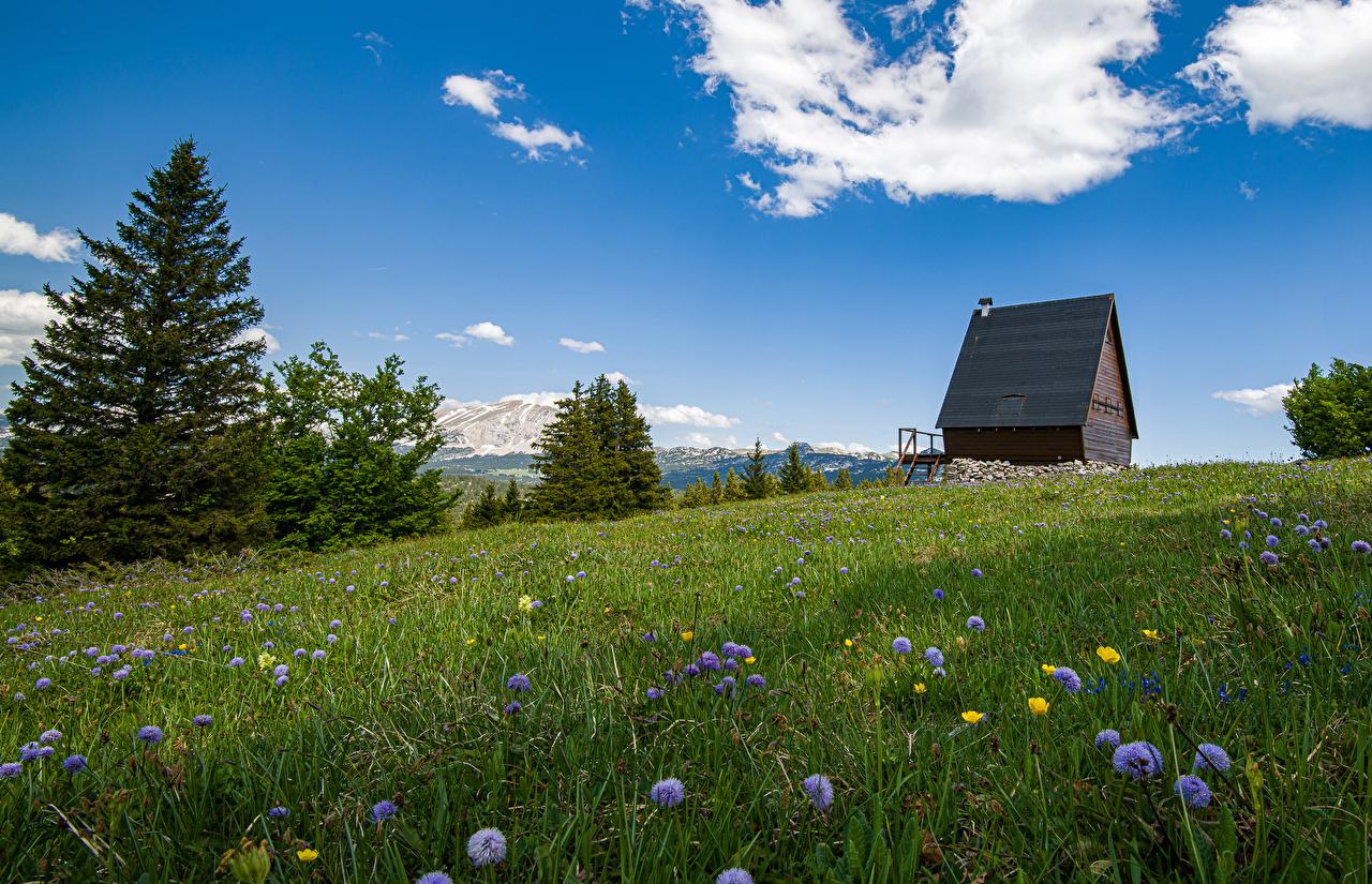 Bilder von Alpen Schweiz Natur Fichten Grünland Gras Flockenblumen Gebäude Kornblume Haus