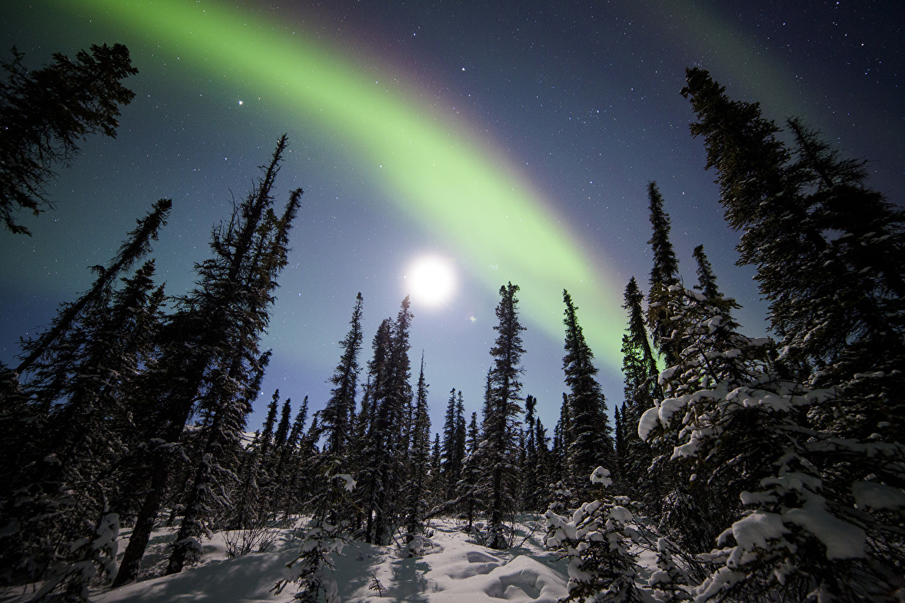 、アメリカ合衆国、空、アラスカ州、Denali National Park,、オーロラ、木、雪、自然、