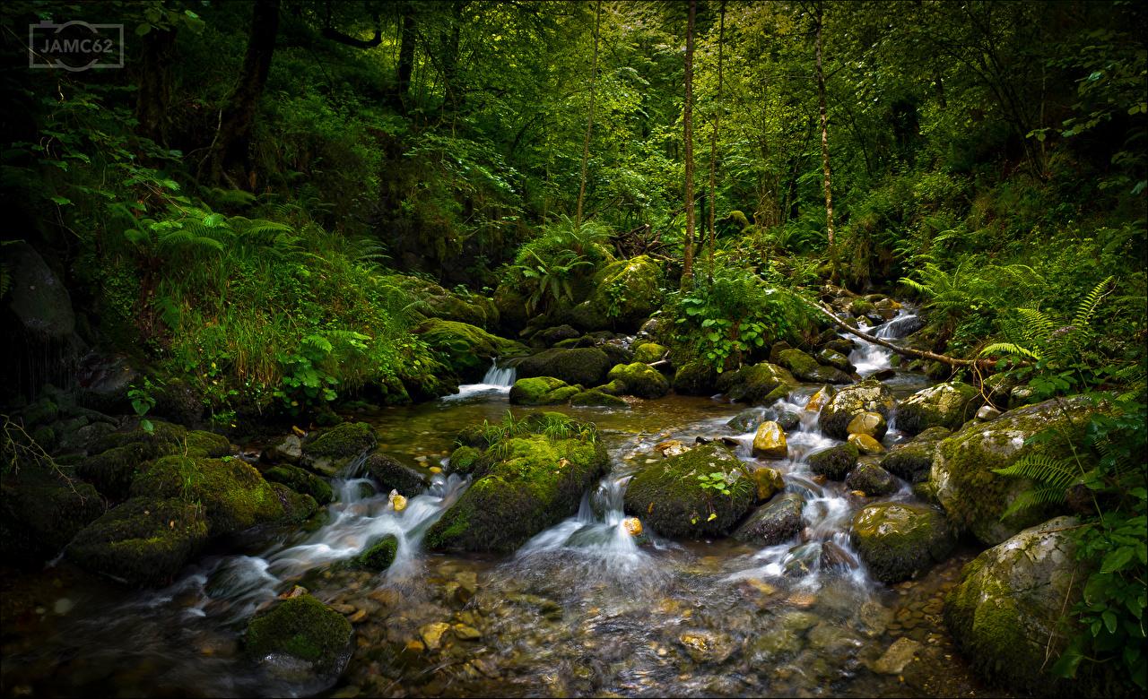 Photos Spain Asturias Stream Nature Forests Moss Stones Trees Creek brook Creeks Streams forest stone