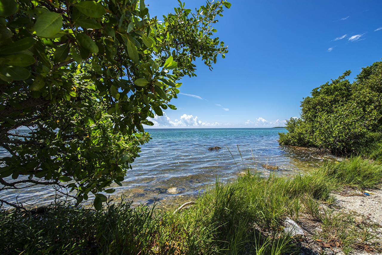 Hintergrundbilder Florida Vereinigte Staaten Everglades Natur Park Gras Küste Strauch USA