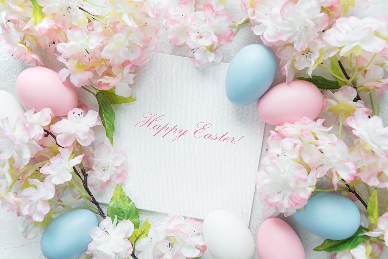 Desktop Wallpapers Easter English Eggs Word - Lettering egg text lettering