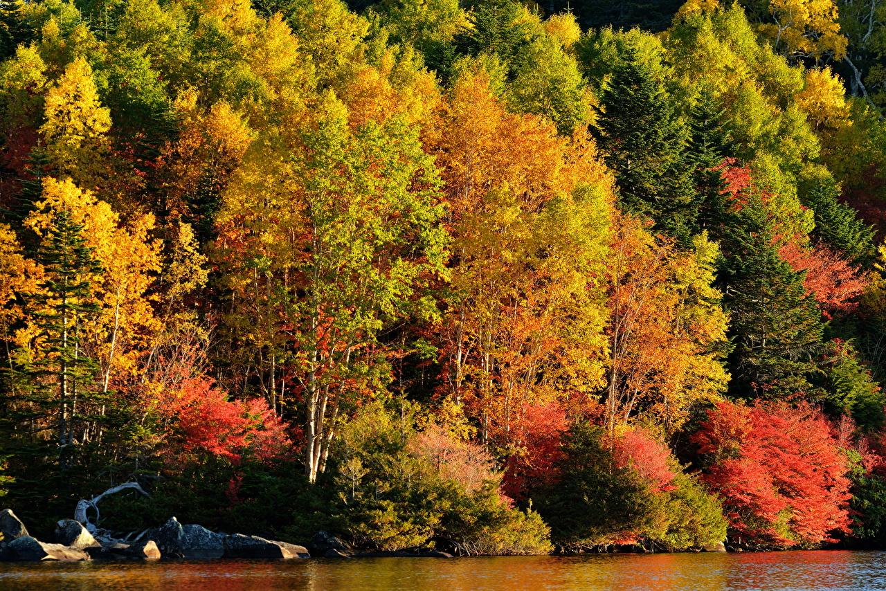 、森林、秋、木、自然