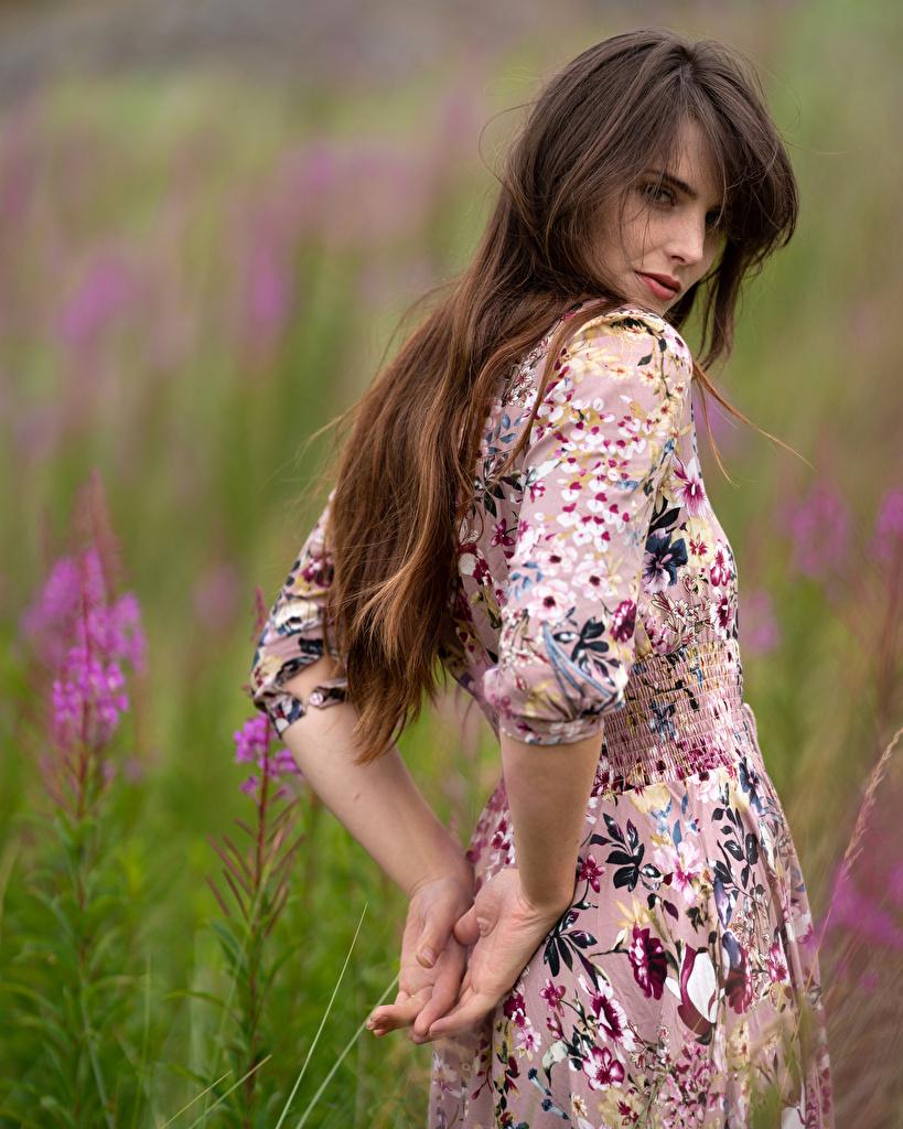 zdjęcie dziewczyna z brązowymi włosami rozmazane tło Dziewczyny Łąka Ręce wzrok Sukienka  dla Telefon komórkowy Szatenka brązowowłosa dziewczyna Bokeh dziewczyna młoda kobieta młode kobiety łąki Spojrzenie
