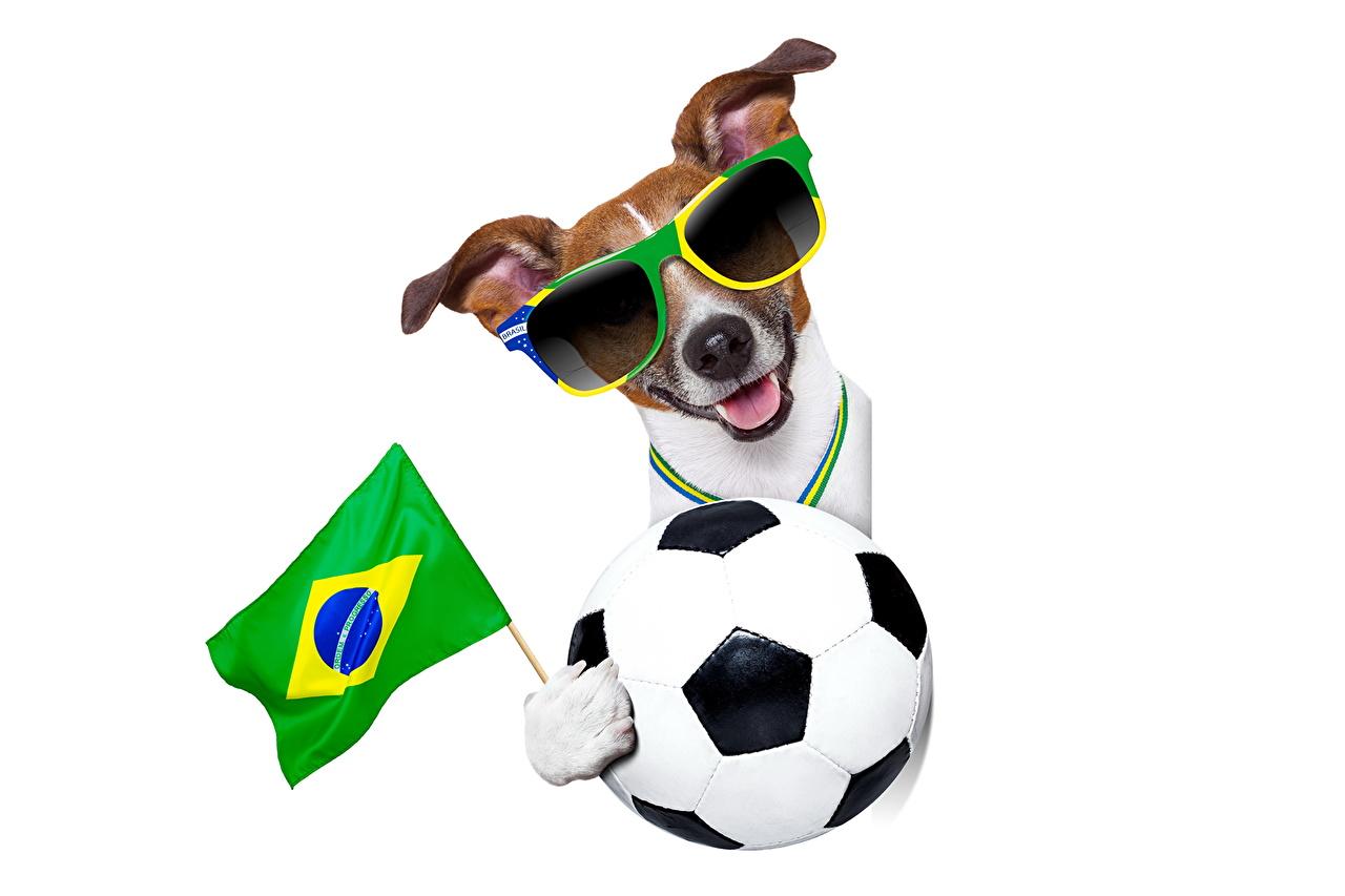 Benutzernamen fussball lustige 100 witzige