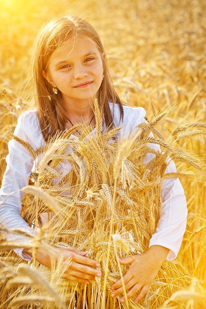 Fotos Kleine Mädchen Kinder Ähren Starren Ähre spitze spitzen Blick