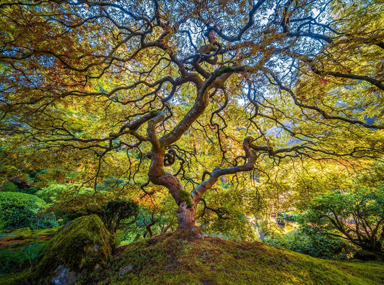 Fotos USA Portland Japanese Garden Natur Park Garten Ast Bäume Vereinigte Staaten Parks