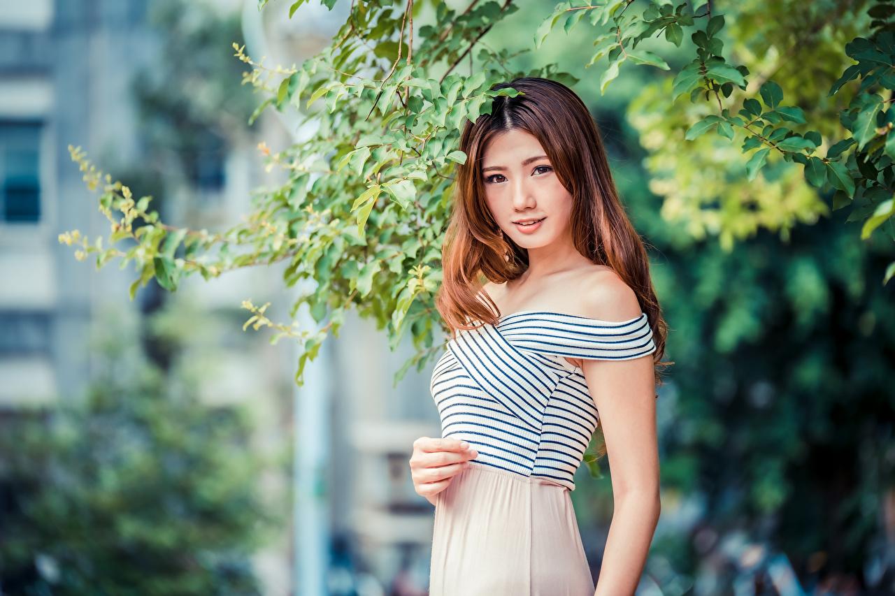 Fotos von Braunhaarige unscharfer Hintergrund junge frau asiatisches Ast Blick Braune Haare Bokeh Mädchens junge Frauen Asiaten Asiatische Starren