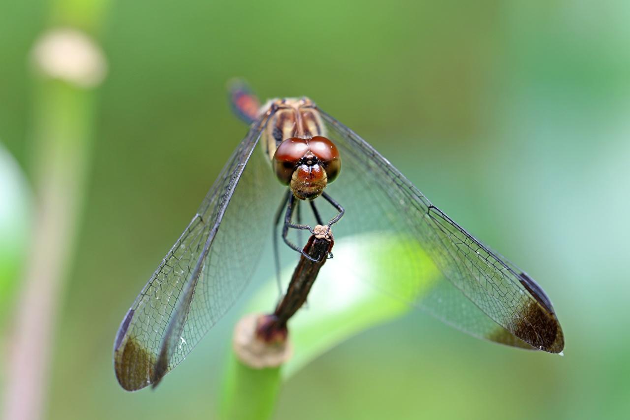 Fotos von Insekten Libellen Bokeh Tiere Großansicht unscharfer Hintergrund hautnah ein Tier Nahaufnahme