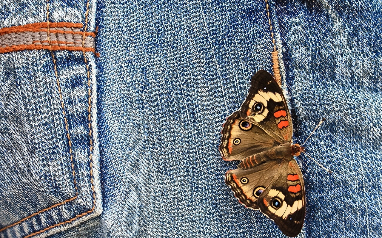 Desktop Wallpapers Butterflies Jeans animal Closeup butterfly Animals