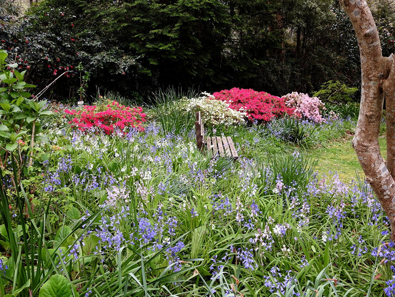 、オーストラリア、公園、George Tindale Memorial Garden in Sherbrooke、ベンチ、圣诞钟、自然