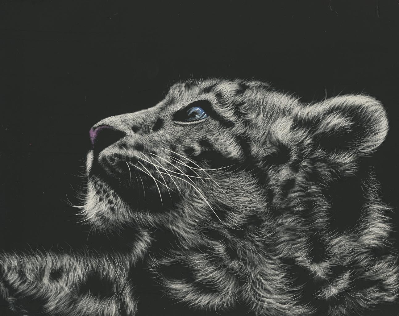 Animales Felino Leopardos Fondo De Pantalla Fondos De: Fondos De Pantalla Grandes Felinos Dibujado Leopardo De