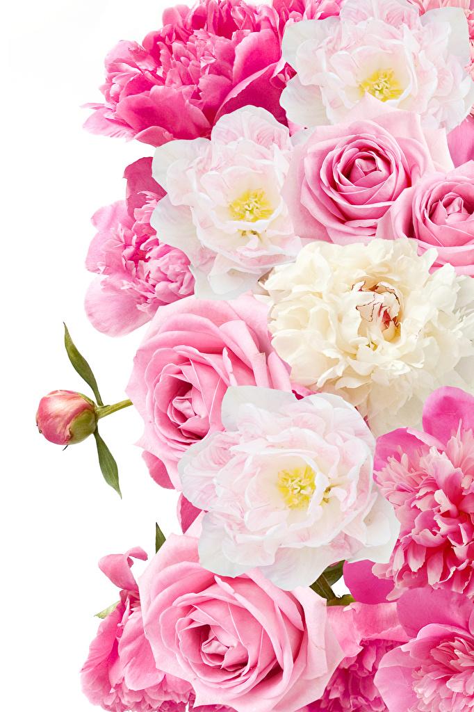 Rosen hintergrundbilder weiße 91 Schöne