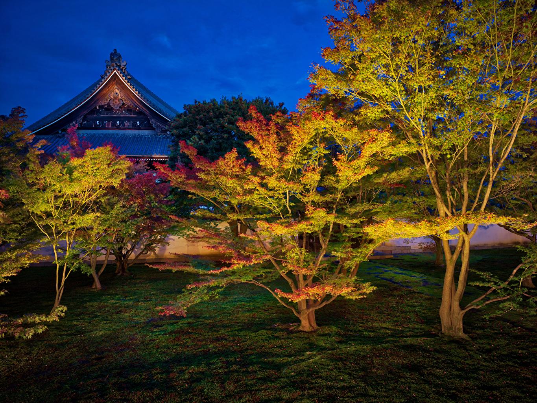 、日本、京都市、公園、秋、木、夜、自然
