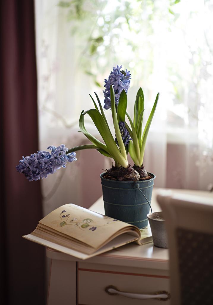 Fotos Blumentopf Blüte Hortensien Bücher Stillleben  für Handy Blumen Hortensie Buch