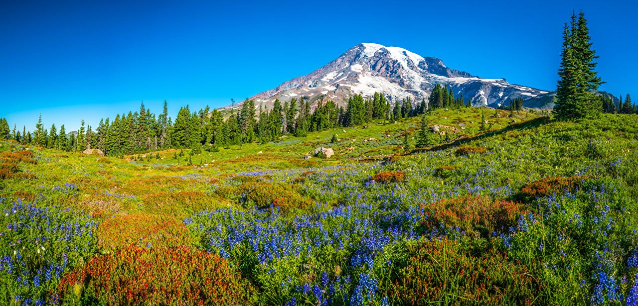 Fotos Washington USA Panoramafotografie Mount Rainier National Park Natur Gebirge Parks Landschaftsfotografie Bäume Vereinigte Staaten Panorama Berg