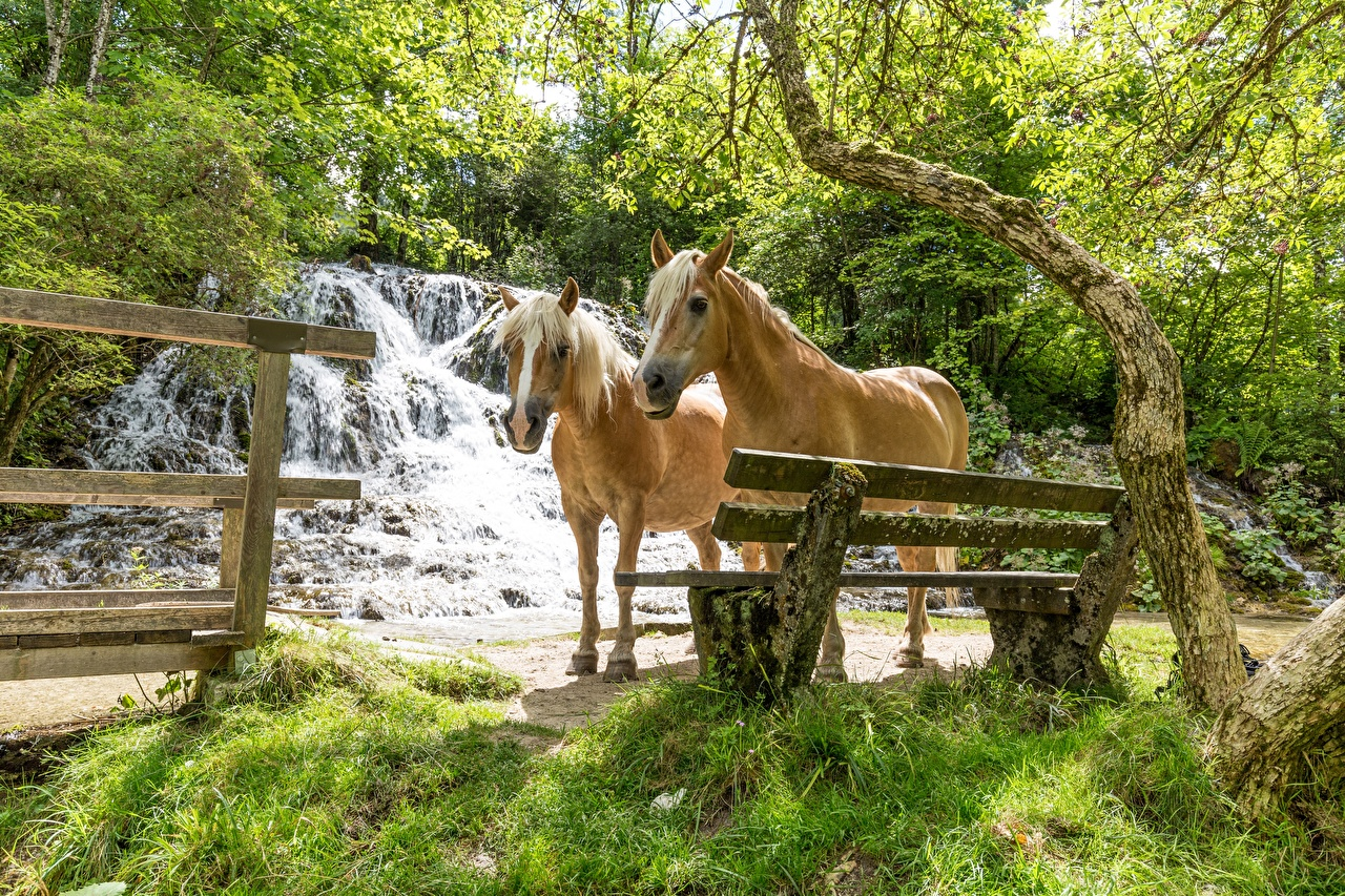 Image horse 2 Waterfalls Grass Bench animal Horses Two Animals