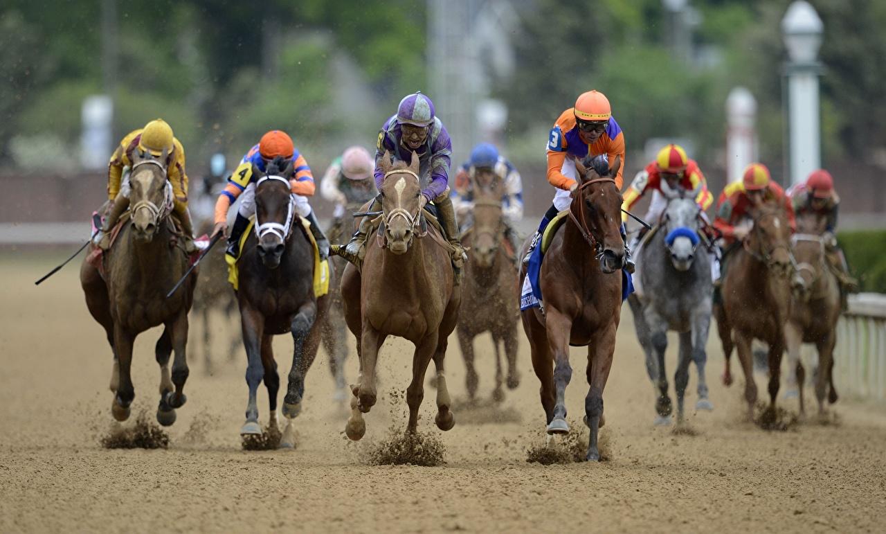 Immagini Cavallo che corre kentucky derby Sport equitazione Sabbia Animali Corsa sportivo sportive Sport equestri Arena animale