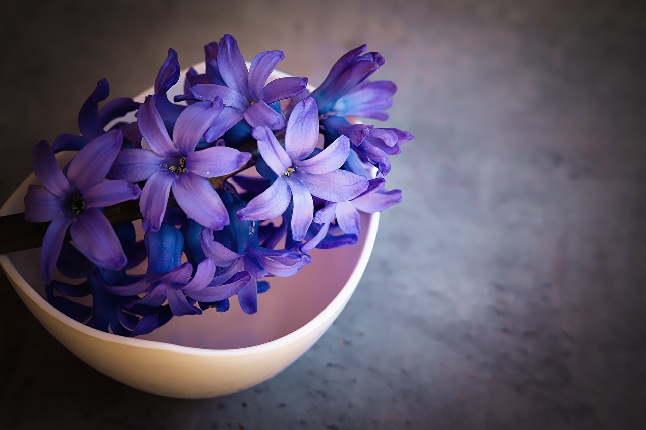 Foto Violett Blumen Hyazinthen Nahaufnahme Blüte hautnah Großansicht