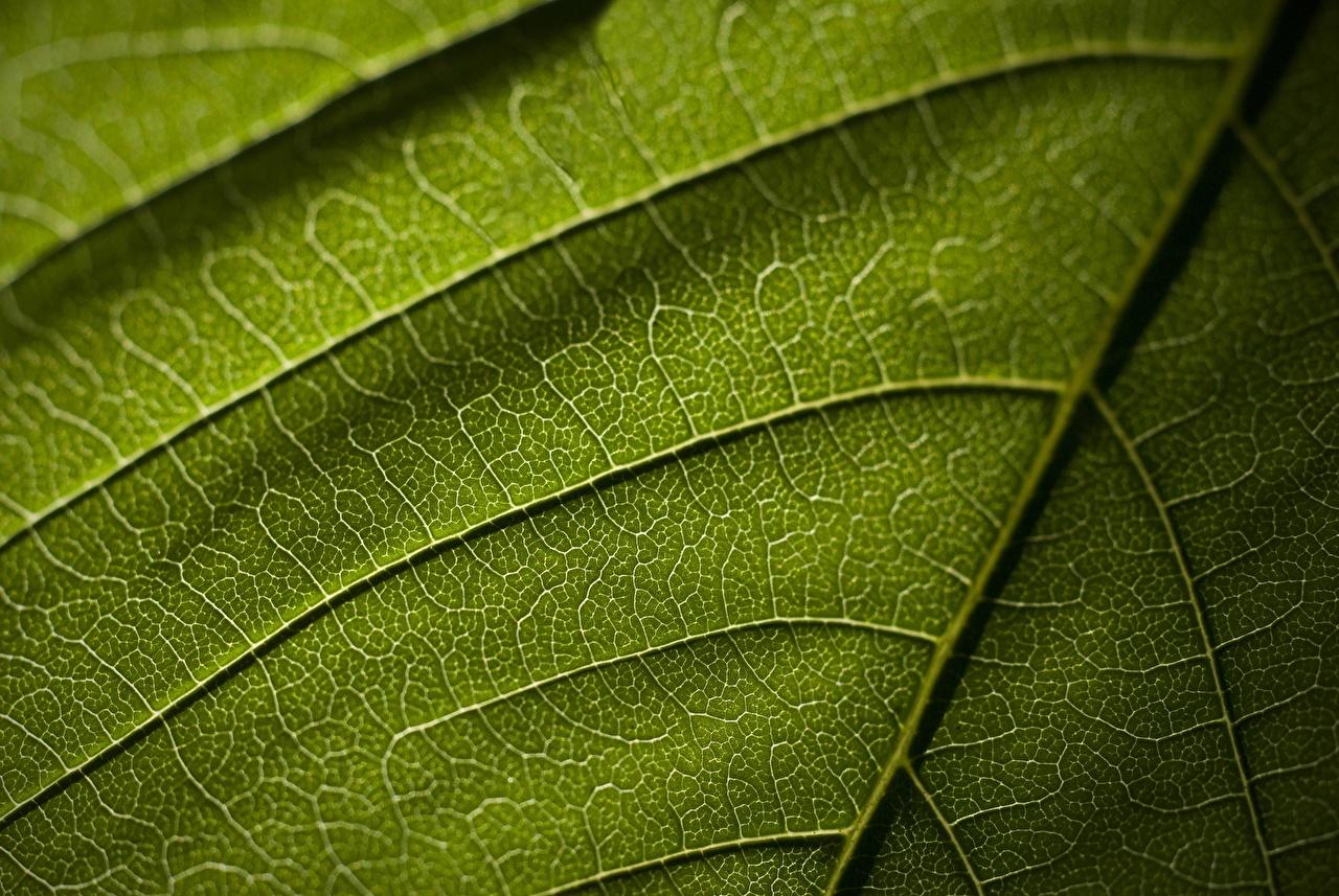 Picture Foliage Texture Green Nature Closeup Leaf