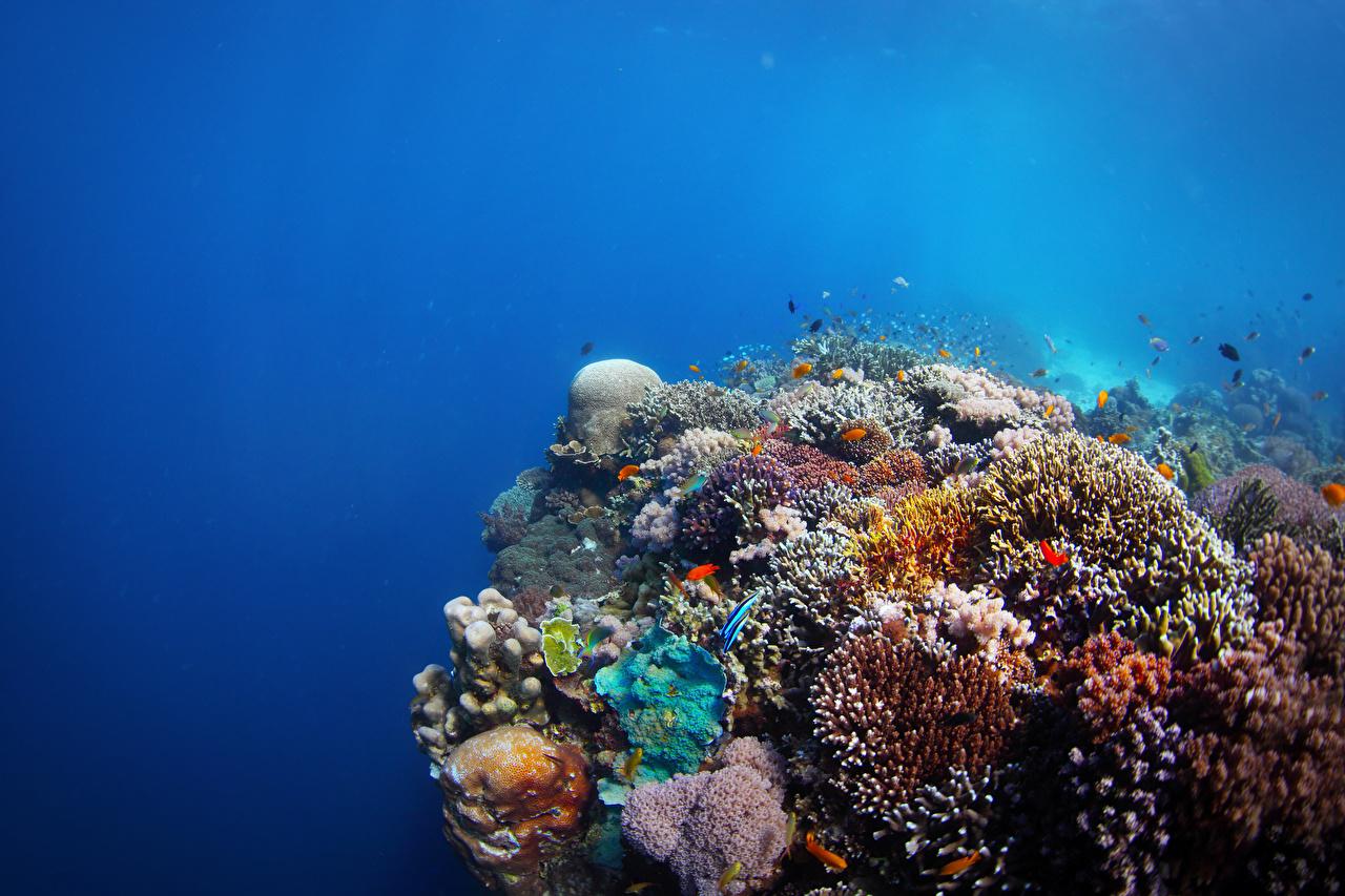 Monde sous-marin Corail Poisson un animal Animaux