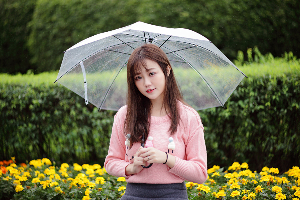Photos female Asiatic Sweater parasol Staring Girls young woman Asian Umbrella Glance