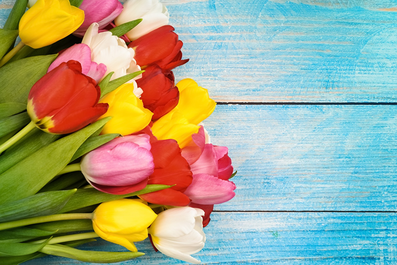 Bilder Mehrfarbige Tulpen Blumen Vorlage Grußkarte Bretter Bunte Blüte