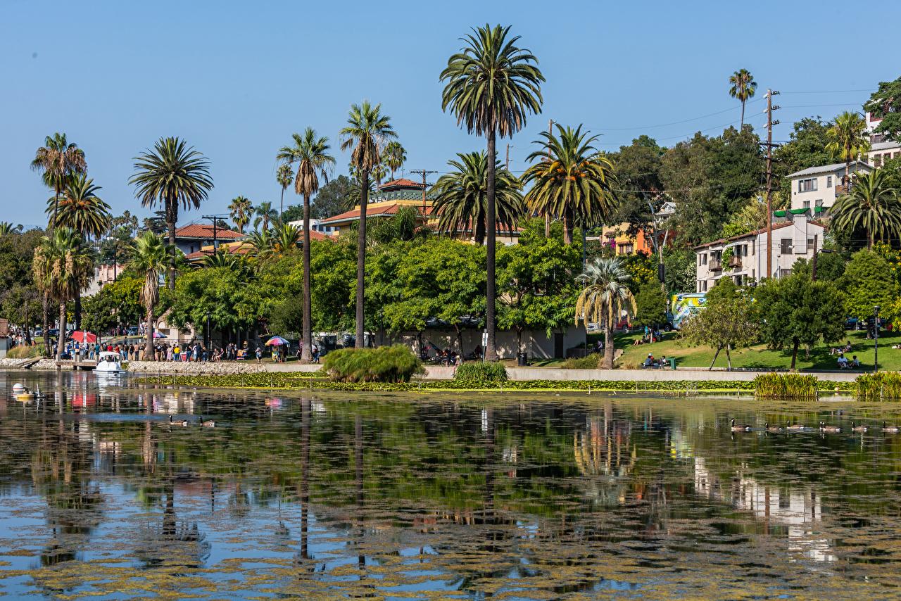Photos California Los Angeles USA Echo Park Lake palm trees Coast Cities Building Palms Houses