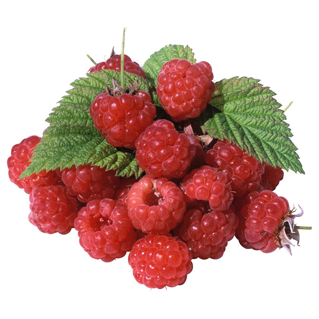 Image Leaf Raspberry Food Berry Closeup White background Foliage