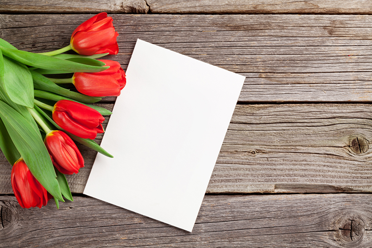 Fotos Blatt Papier Rot Tulpen Blumen Vorlage Grußkarte Bretter
