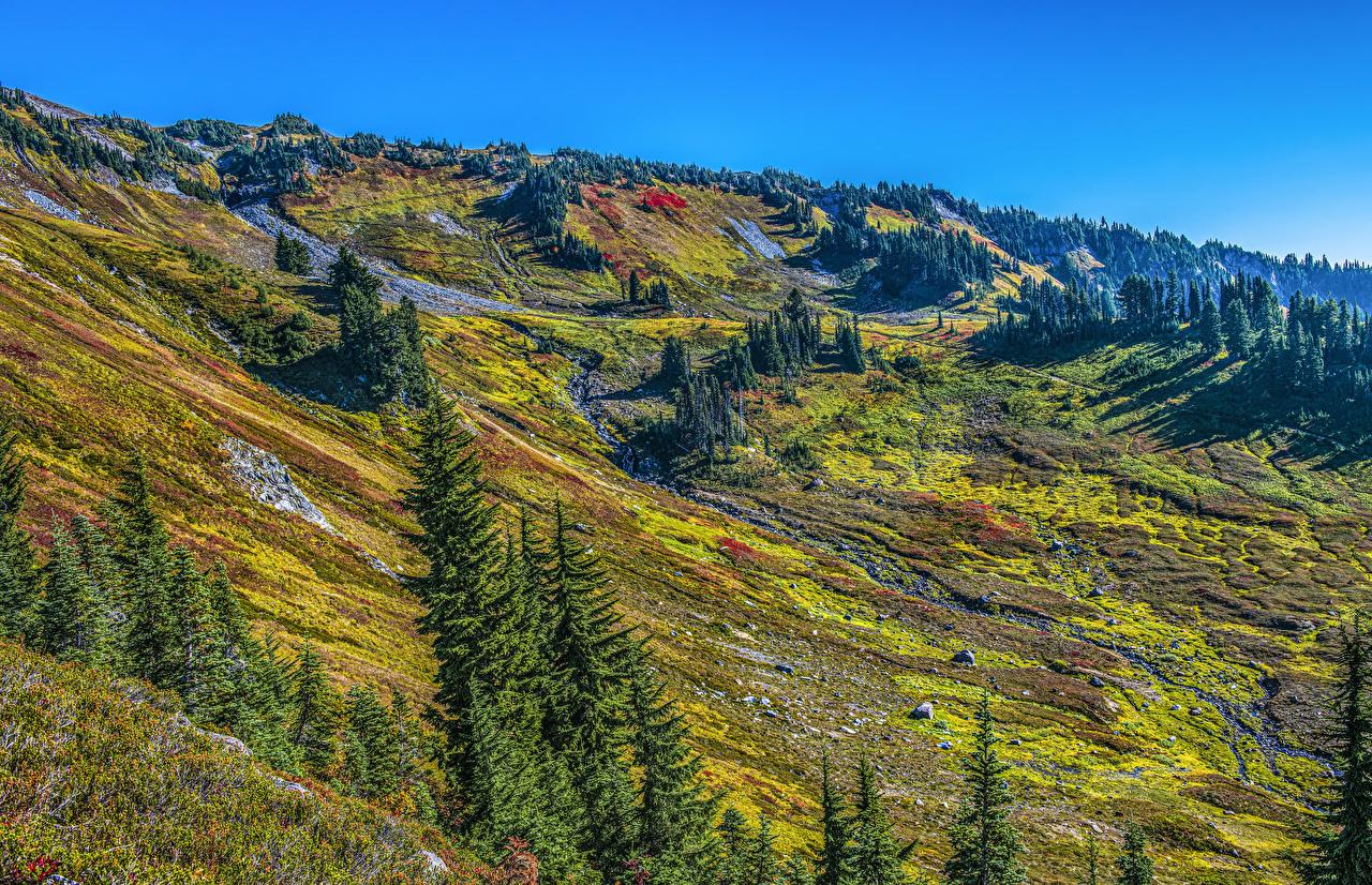 Picture Washington USA Mount Rainier National Park Spruce Nature park Parks