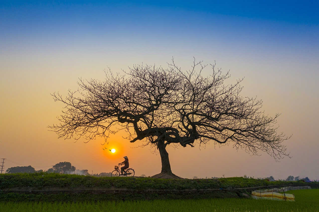 Wallpaper bicycles Sun Nature Asian Sunrises and sunsets Trees bike Bicycle Asiatic sunrise and sunset