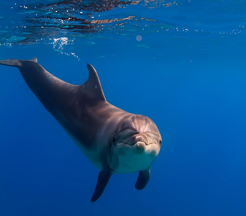 Photo Dolphins Underwater world Animals animal