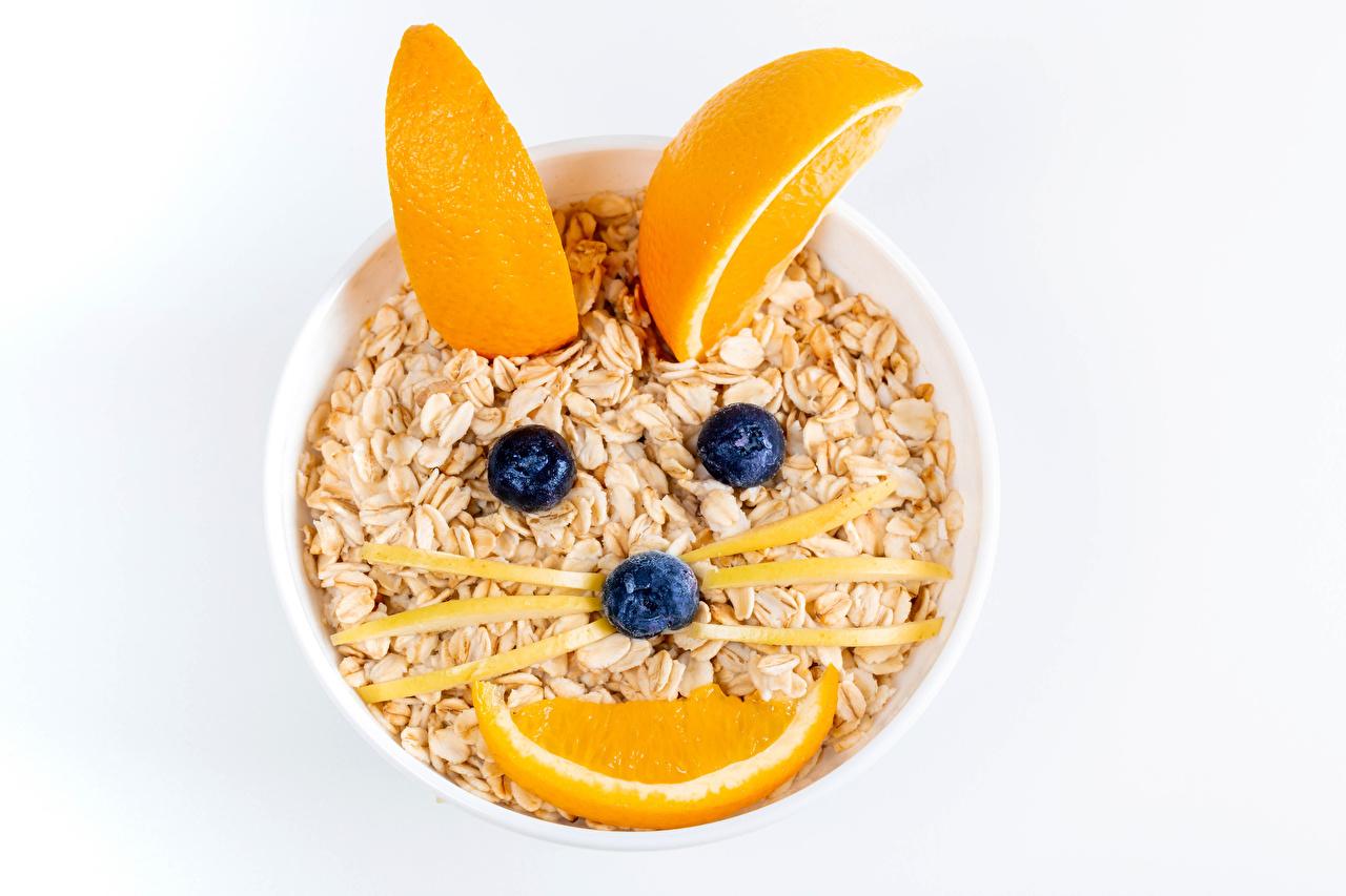 ,創造性,家貓,什锦粥,橙,蓝莓,白色背景,食品,食物,