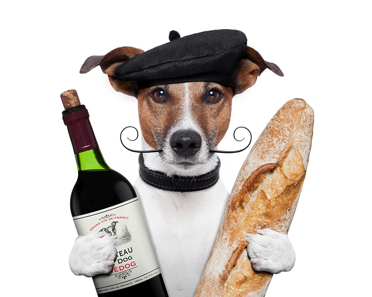 Wallpaper Animals Jack Russell terrier Dogs Wine Bread