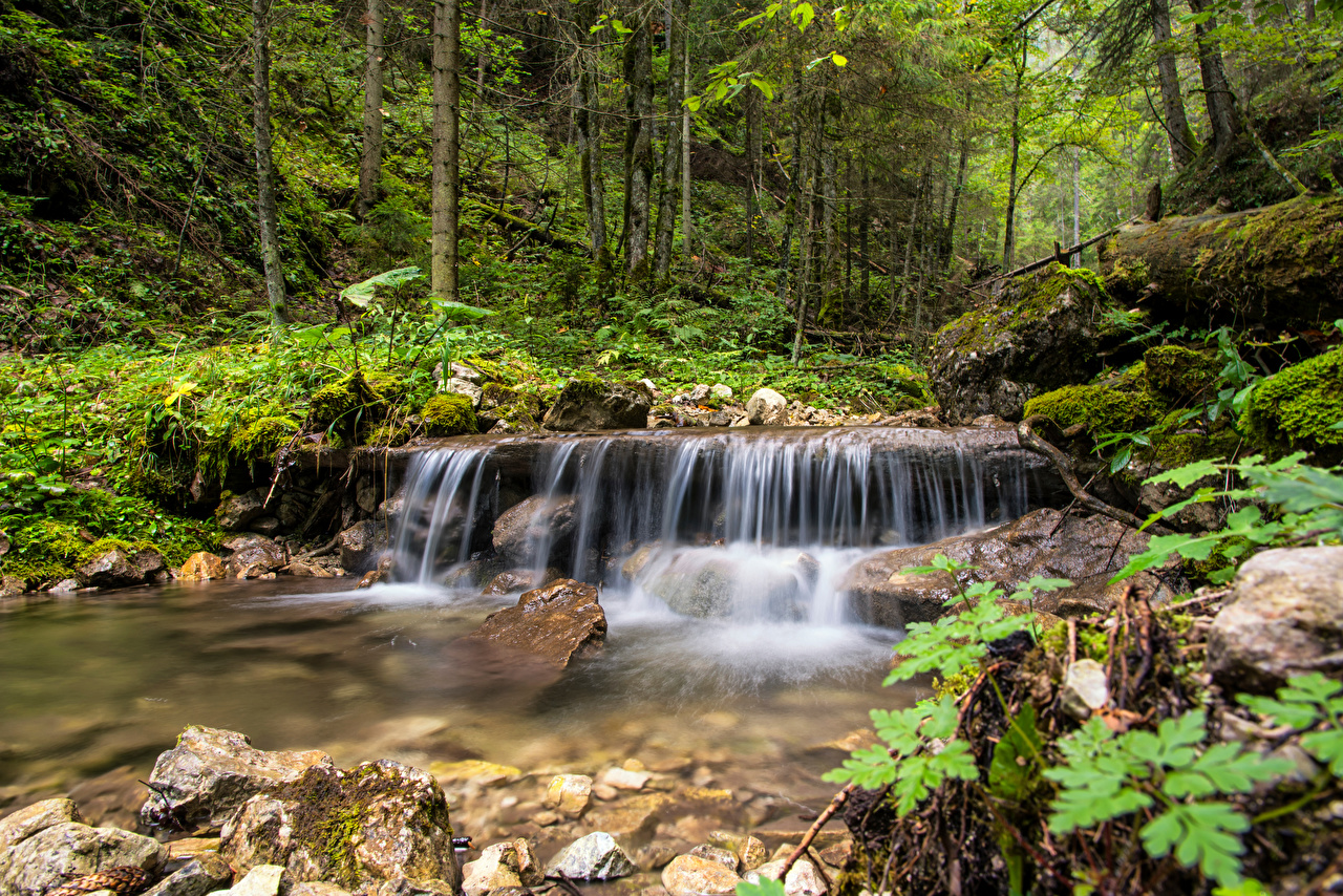 Picture Slovakia Spisska Nova Ves Stream Nature Forests Stones Trees Creek brook Creeks Streams forest stone